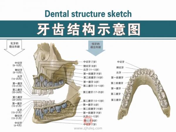 杭州网友,牙齿矫正可以不拔牙吗?