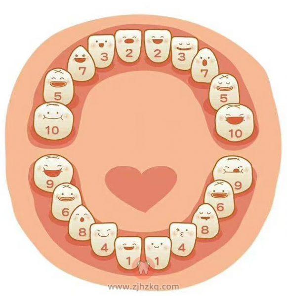 乳牙重要性