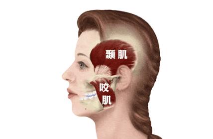 杭口颞颌关节专家团队